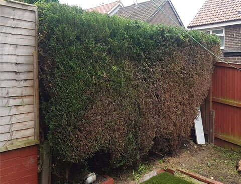 hedge reduction feautured